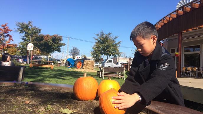 保育園にかぼちゃをセットする男の子