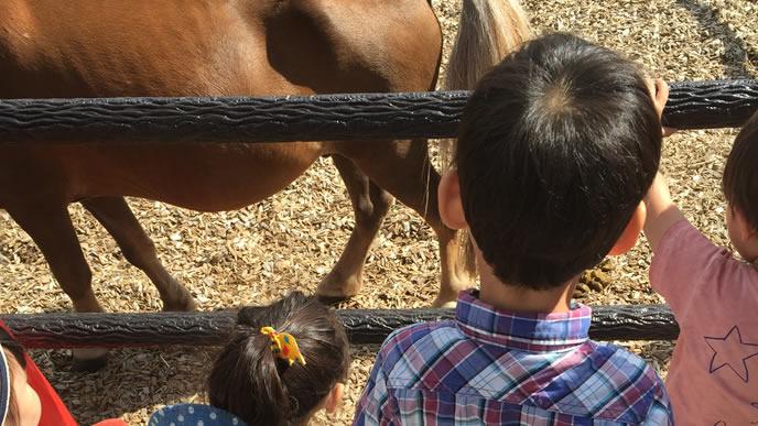 初めて馬を見て戸惑う子供達