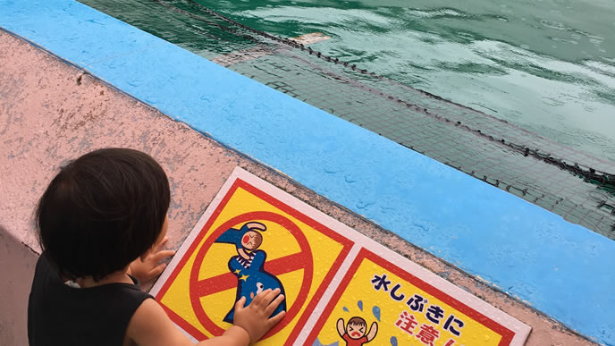 水族館のイルカを必死に探す男の子