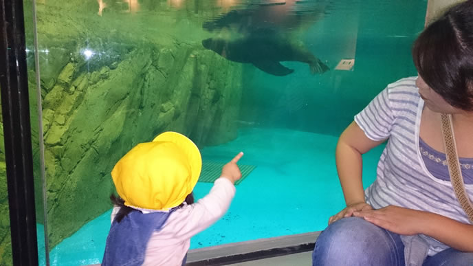 水族館でアザラシを見つけテンションが上がる2歳児