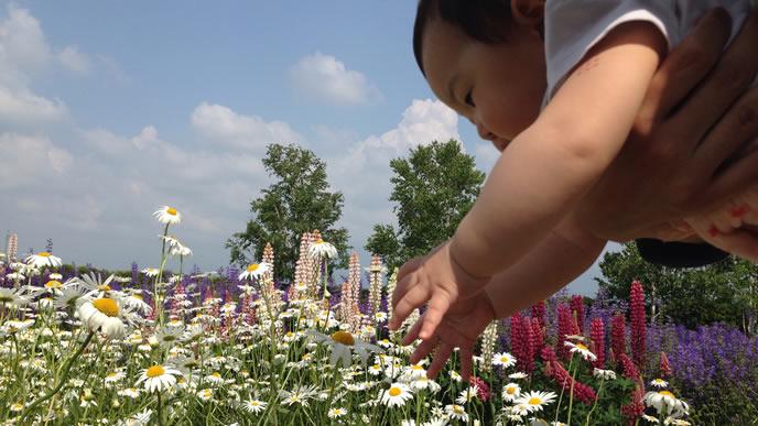 花に興味があり手を伸ばす赤ちゃん