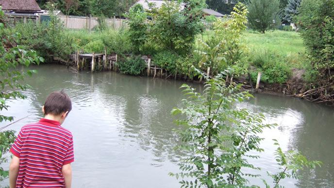 池で魚を見つめる学校嫌いの小学生