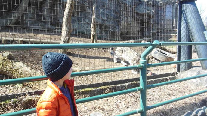 学校を休み大好きな動物園へ行く小学生