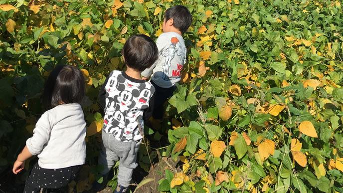 畑を探検する仲良し三兄妹