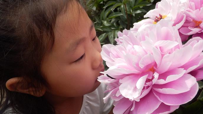 パパと同じくらい花が好きな女の子