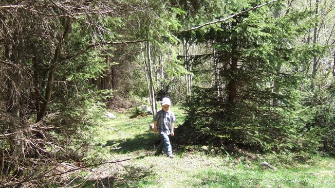 一人で森を探検する男の子