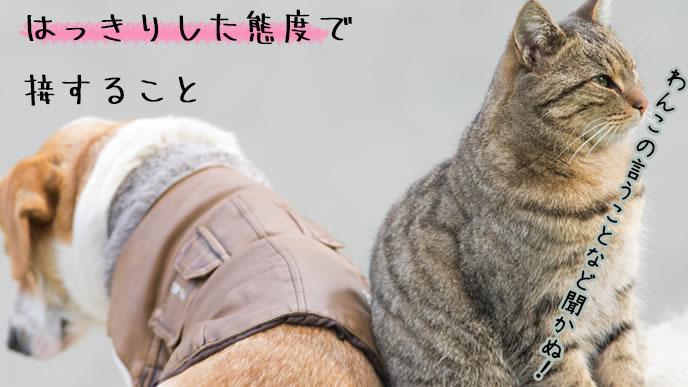仲たがいした犬と猫