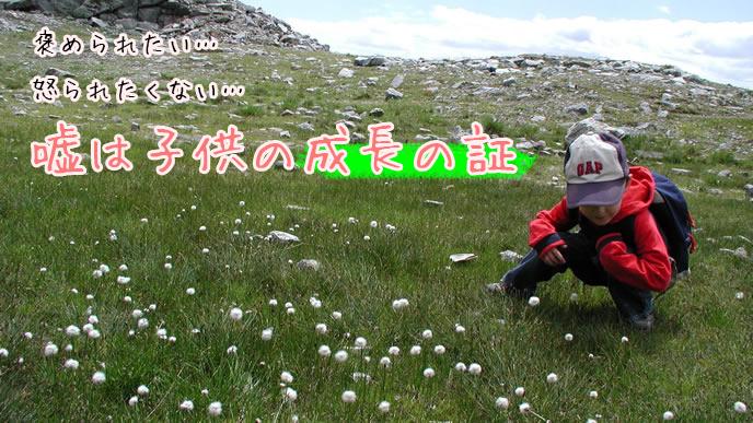 草原でクローバーを探す男の子