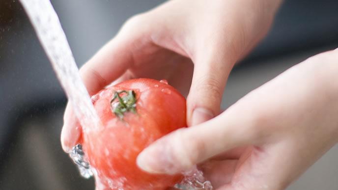 採れたてのトマトを洗うママ