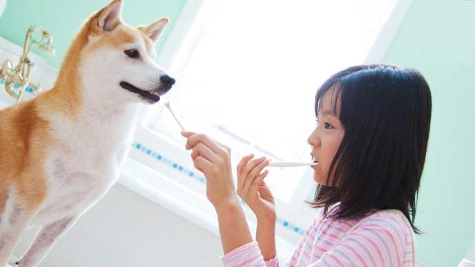 自分の歯磨きを忘れて犬の歯磨きをしている女の子