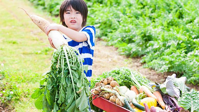 農業体験をしている男の子
