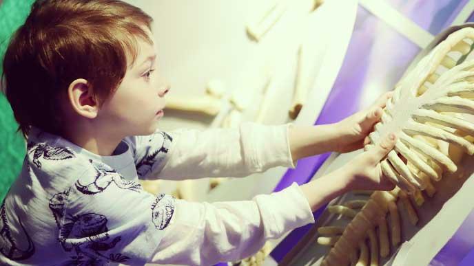 人体の骨の展示物を触る小学生
