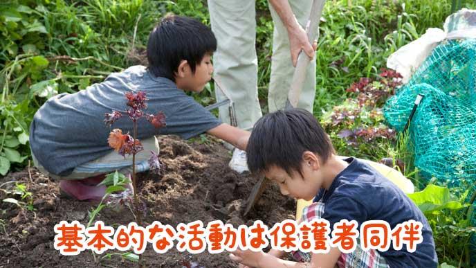 親と一緒に畑を掘っている子供達