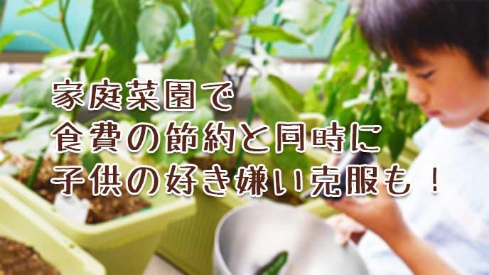 ベランダの家庭菜園でナスを収穫してる男の子