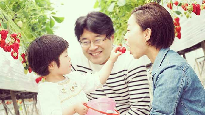 いちご狩りで母親にいちごを食べさせてる女の子