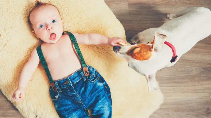 仰向けになっている赤ちゃんと愛犬