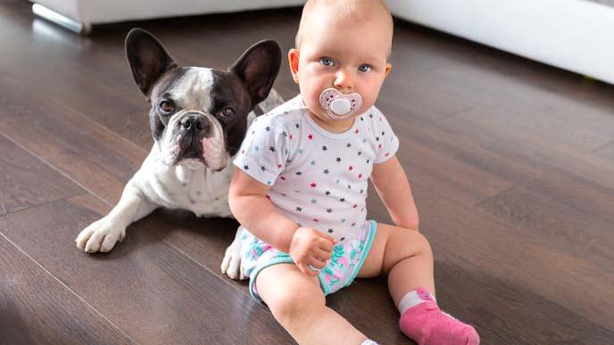赤ちゃんとパグ犬