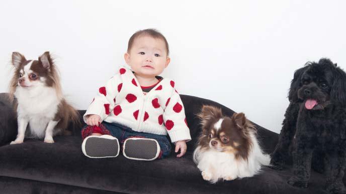 赤ちゃんと犬の記念写真