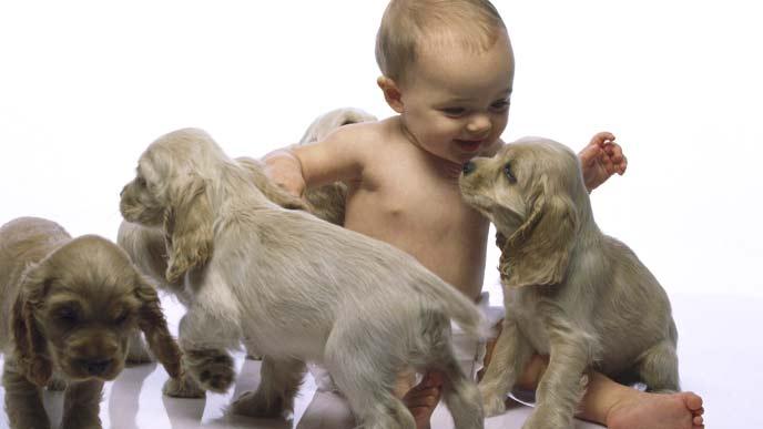 赤ちゃんと犬の赤ちゃん達