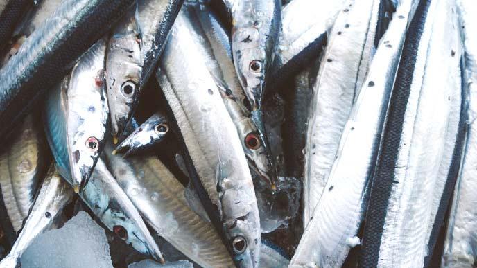 朝市に並ぶ秋刀魚