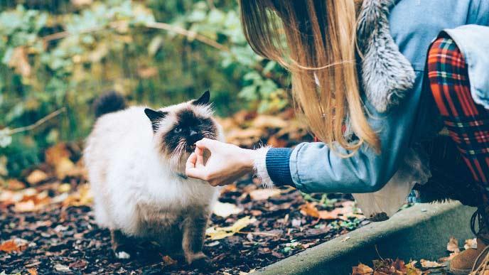 猫にえさをあげている女の子