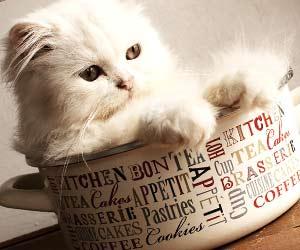 お気に入りの缶の中にはいっている子猫