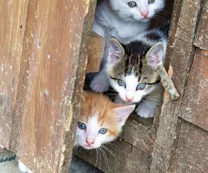 小さな子供と籠にはいっている子猫