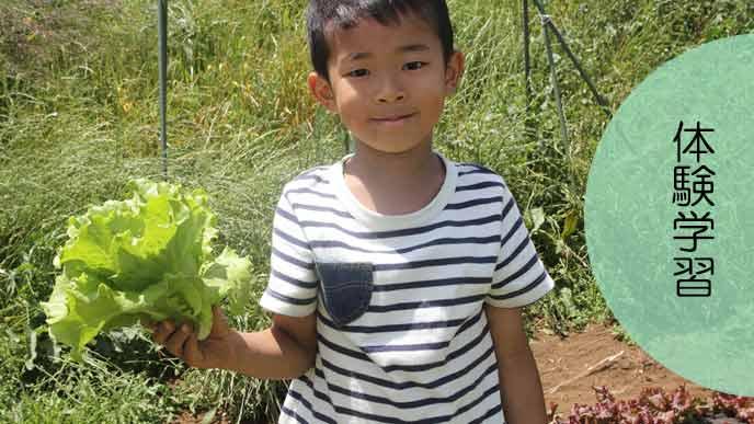 家庭菜園で野菜を栽培する小学生