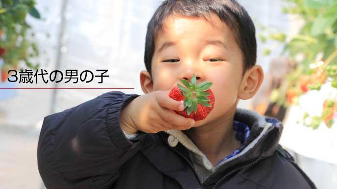 苺を口にいれるお琴の子