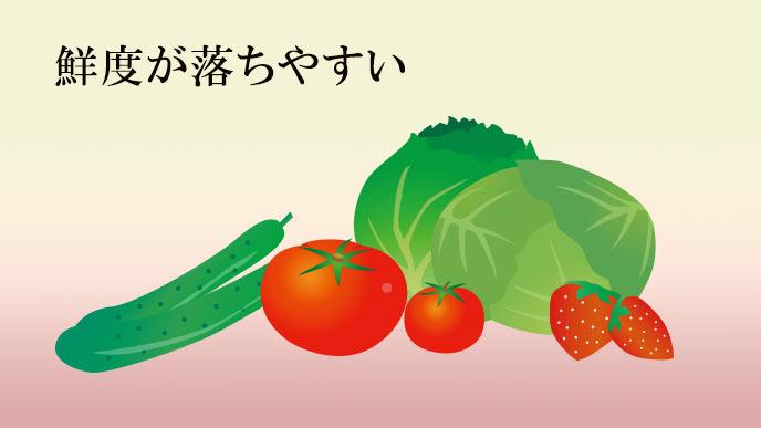 キュウリ、トマト、キャベツ、キャベツ
