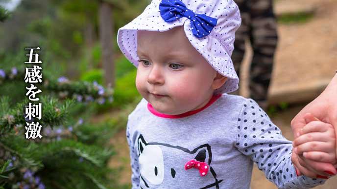 歩くことを楽しむ幼児