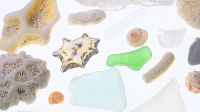 貝殻・シーグラス