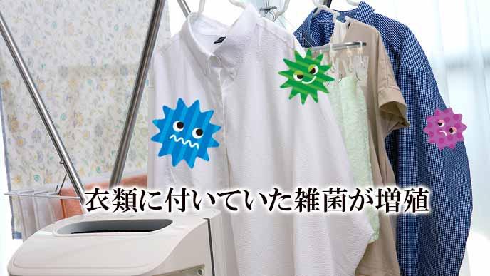 部屋干し衣類で雑菌が増殖