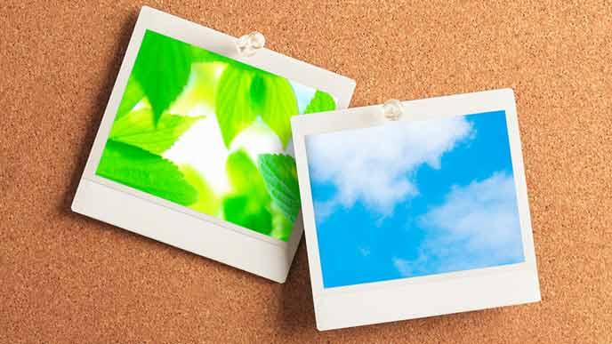 コルクボードに貼られた写真