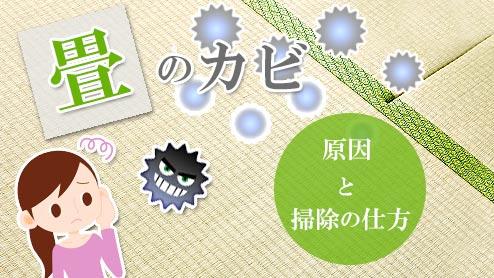 畳のカビを撃退しよう!予防と対策で湿気と戦う!