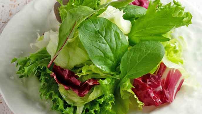 葉物野菜のサラダ