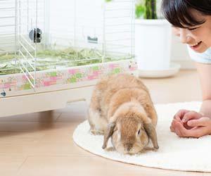 室内でウサギを飼う女性