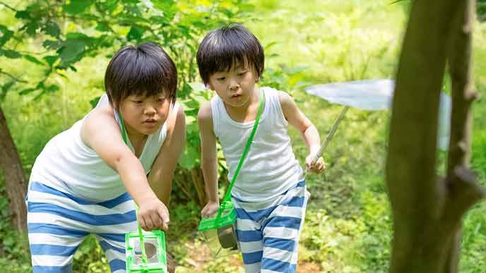 林の中で虫捕りに夢中な子供達
