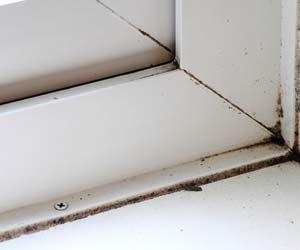 窓枠のカビ