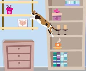 猫が棚へ飛び乗る