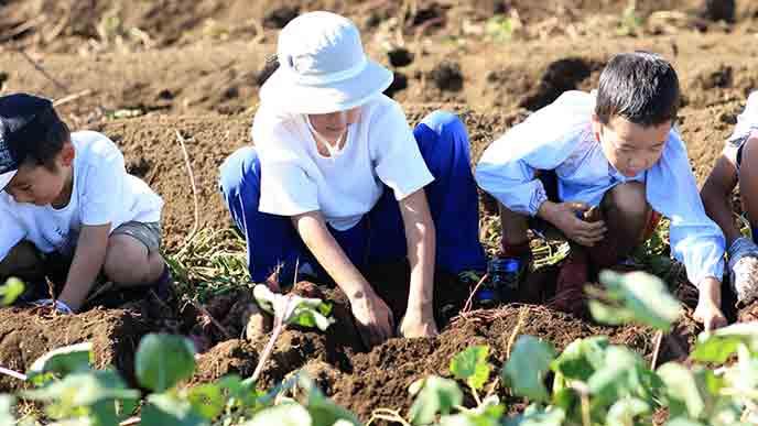 野菜づくりの農業体験をする子供達